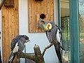 Bird - Botanical Garden - Geneva - panoramio.jpg