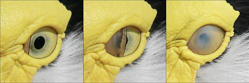 Bird blink-edit.jpg