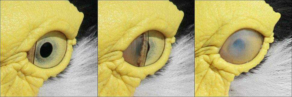 Bird blink-edit