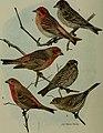 Bird lore (1914) (14752535821).jpg