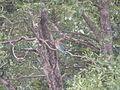 Bird sightings.jpg
