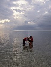 Two people in shallow water viewing the bay bottom