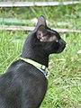 Black cat head in Billom 01.jpg