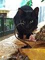 Black cat nam.jpg