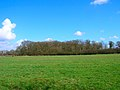 Blackstone Gate Wood - geograph.org.uk - 145175.jpg