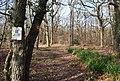 Blean Woods Nature Reserve, West Blean Woods - geograph.org.uk - 1143113.jpg