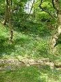 Bluebells on hillside - geograph.org.uk - 1886064.jpg