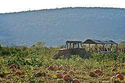 Bluemont pumpkin farm.jpg