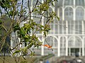 Botânico - CGLS.jpg