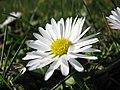 Botanic Garden - Cluj-Napoca (2372059576).jpg