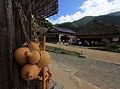 Bottle Gourd Lagenaria siceraria var. gourda 瓢箪(ひょうたん).jpg