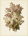 Bouquet of Lilacs (Boston Public Library).jpg
