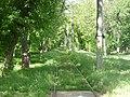 Brăila tramrails in het groen.jpg