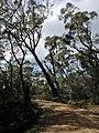 Braeside Trail - panoramio (11).jpg