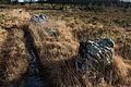 Brasparzh - An Eured Vein 20141214-13.jpg