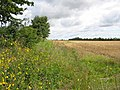 Bridleway Cleveley Oxfordshire - geograph.org.uk - 231062.jpg