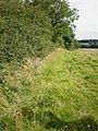 Bridleway to Beck Plantation, Bugthorpe - geograph.org.uk - 1429218.jpg