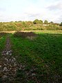 Bridleway to North Corner - geograph.org.uk - 267734.jpg