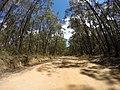 Brooman NSW 2538, Australia - panoramio (101).jpg