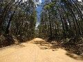 Brooman NSW 2538, Australia - panoramio (106).jpg