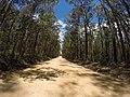 Brooman NSW 2538, Australia - panoramio (115).jpg