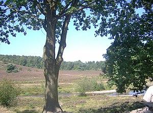 Brunssumer Heide