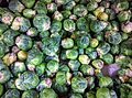 Brussels Sprouts at store.jpg