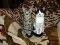 Bucuresti, Romania, doua pisici frumoase.JPG