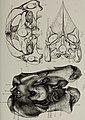 Bulletin du Musée royal d'histoire naturelle de Belgique; Medeelingen van het Koninklijk Natuurhistorisch Museeun van België (1883) (20431098112).jpg