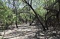 Butcher Jones Trail, Burro Cove and Beyond, Tonto National Park, Arizona - panoramio (38).jpg
