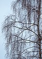 Byvegen vintervandring 01.jpg
