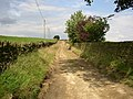 Byway to Nether Moor, South Crosland - geograph.org.uk - 499907.jpg