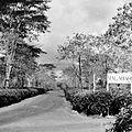 COLLECTIE TROPENMUSEUM Tanara- en Malabar theetuinen hoogvlakte van Pengalengan TMnr 10011894.jpg