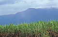 CSIRO ScienceImage 3833 Tropical rainforest ranges with sugar crop in foreground north of Cardwell QLD.jpg
