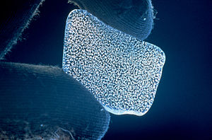 Ice core - Sliver of Antarctic ice showing trapped bubbles. Images from CSIRO.