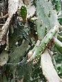 Cactus20170706 152521.jpg