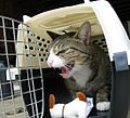 Cage-mad cat.jpg