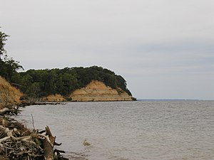 Calvert Cliffs State Park - The park's namesake cliffs