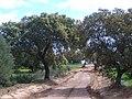 Camino alisado - panoramio.jpg