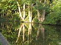 Canal reflections at Bingley - geograph.org.uk - 797454.jpg