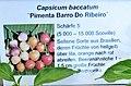 Capsicum baccatum Pimenta Barro Do Ribeiro.jpg