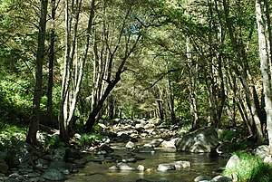 Carmel River - Image: Carmel River Ventana Wilderness Near Sulphur Springs