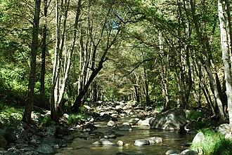 Carmel River - Carmel River in the Ventana Wilderness