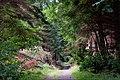 Castlewellan forest park (5) - geograph.org.uk - 550561.jpg