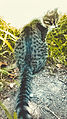 Cat pisik kedi animal pussy svln4821 cute 05.jpg