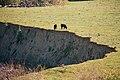 CattleCañada Larga.jpg
