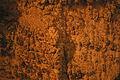 Cave Popcorn in Gardner Cave 20130629.jpg