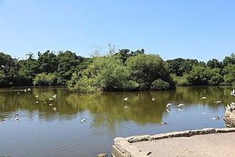 Southampton Common - Southampton Common Cemetery lake