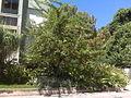 Centro Medico Docente La Trinidad (CMDLT) 2012 078.jpg
