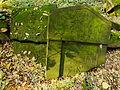 Chenstochov ------- Jewish Cemetery of Czestochowa ------- 172.JPG